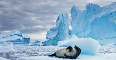 Antarctic Luxury Cruises
